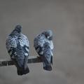 aihua200775