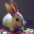 我家的兔儿朵
