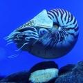 深海啵啵尼