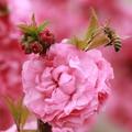 我们一起看樱花