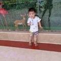 惠青的寶寶