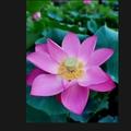 小鱼lily
