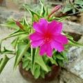 阳阳向日葵
