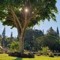 818小丑鱼