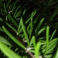 蔷薇521qw