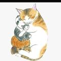 我爱中华田园猫
