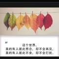  君子兰_2864